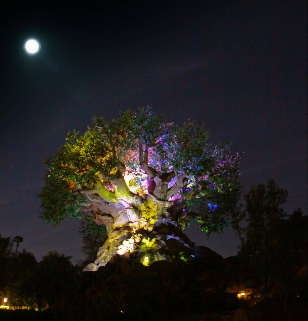 Animal Kingdom Tree of life awakens