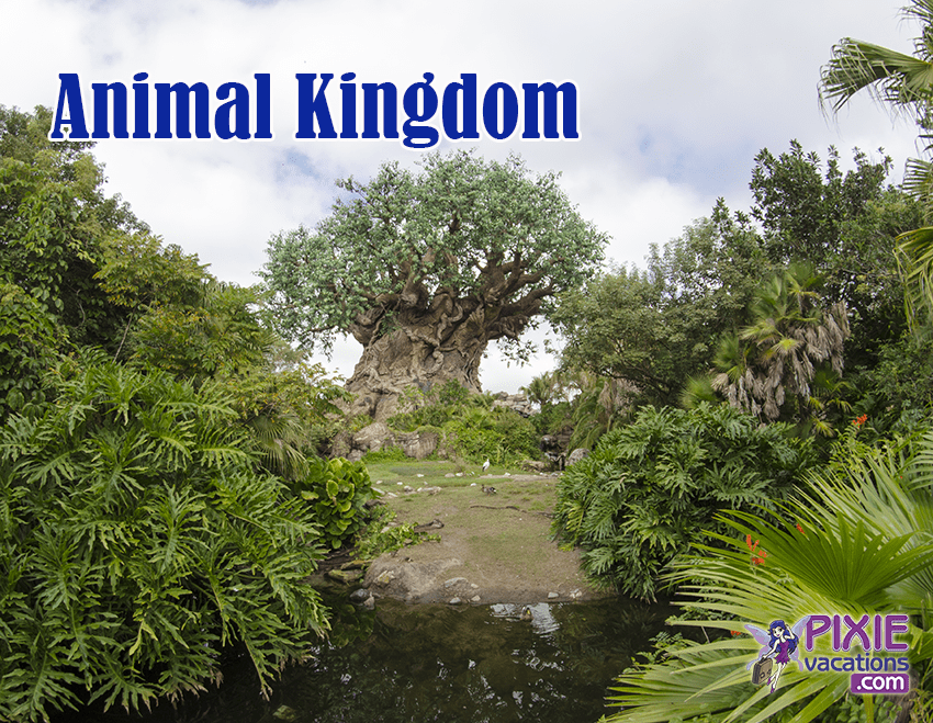 No Wait for these rides at Disney World Animal Kingdom - Disney World attractions with no wait
