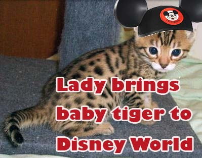 Lady brings baby tiger to Disney World